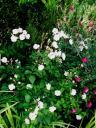 Garden Flower Shots3