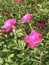 Garden Flower Shots7