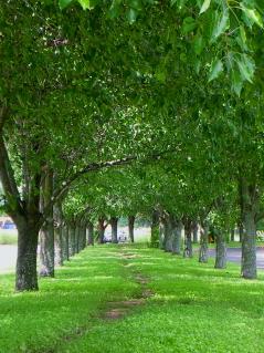dscn1590-pecan-park-r051807-239×319.jpg