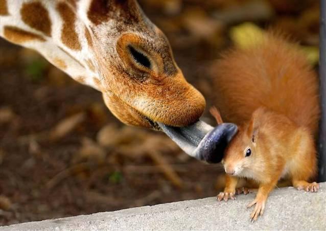 when-is-a-kiss-more-than-a-kiss.jpg